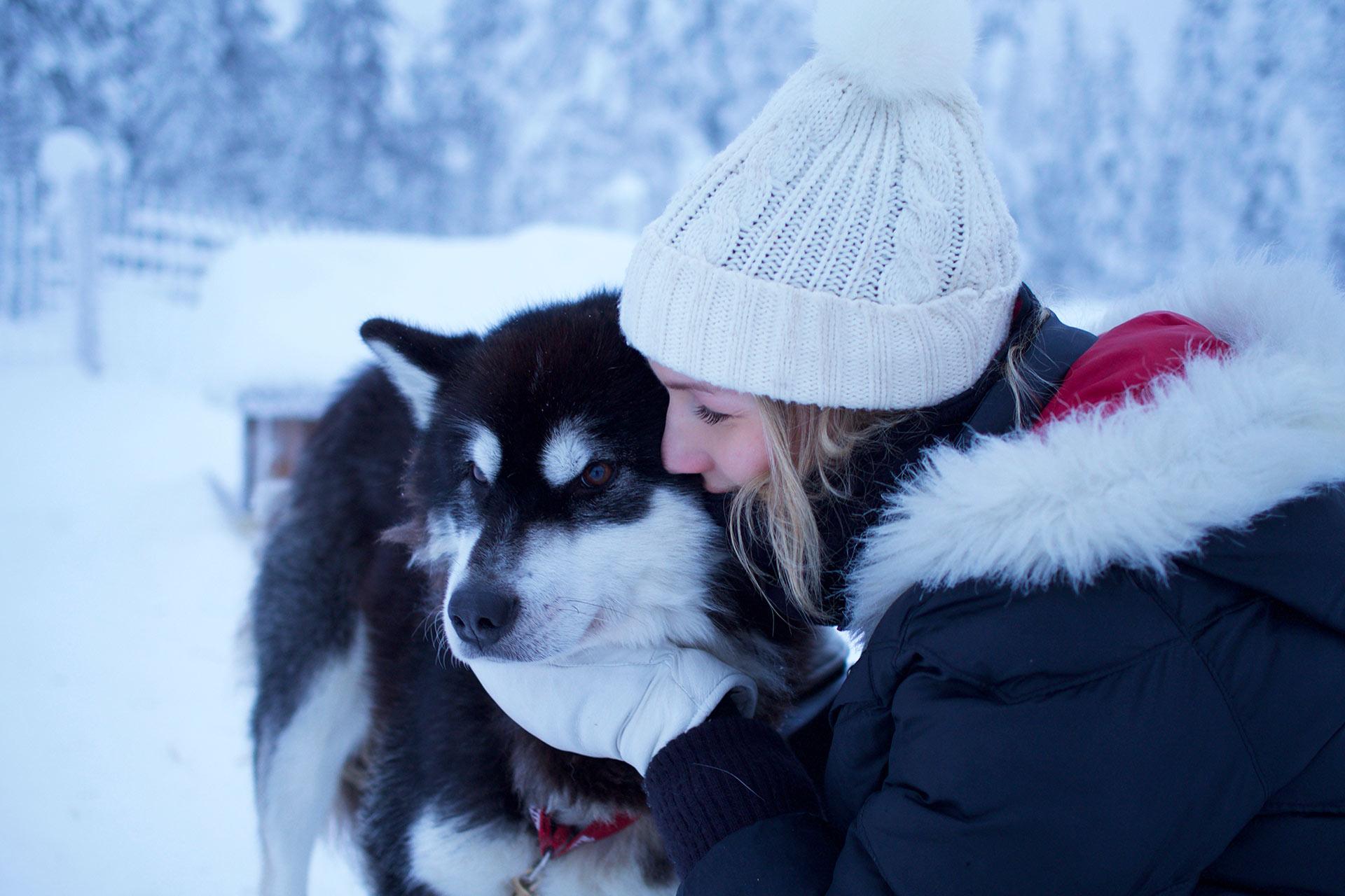 Husky, valjakkokoira Levillä Polar Lights Toursilla.