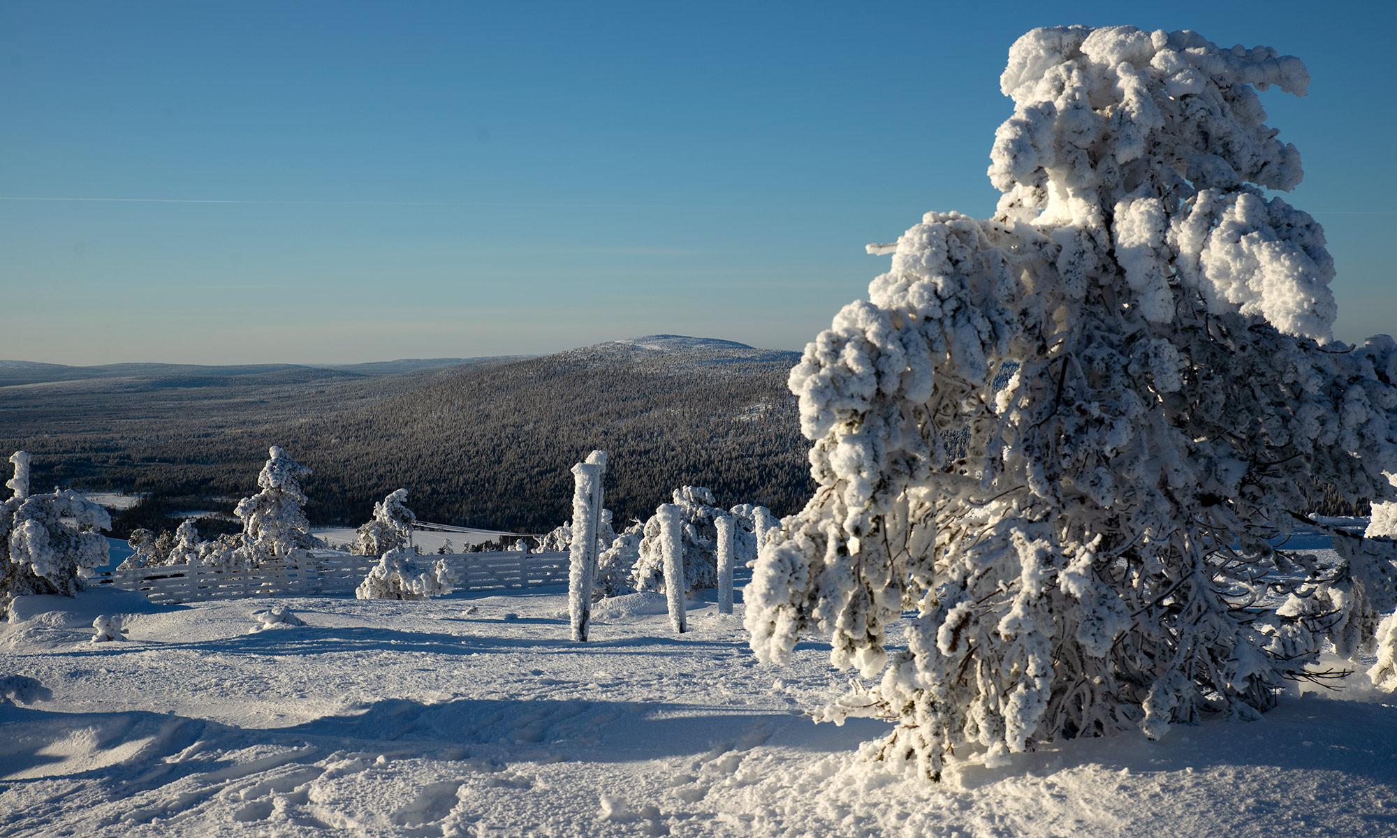 Etätyöviikon luminen talvimaisema Lapin Levillä.